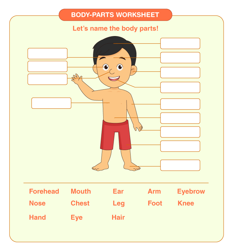 Label the parts of the body: Body parts worksheets for kids