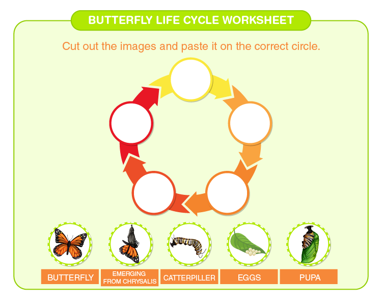 Cut and paste the stages of butterfly life cycle: Free printable butterfly life cycle worksheet