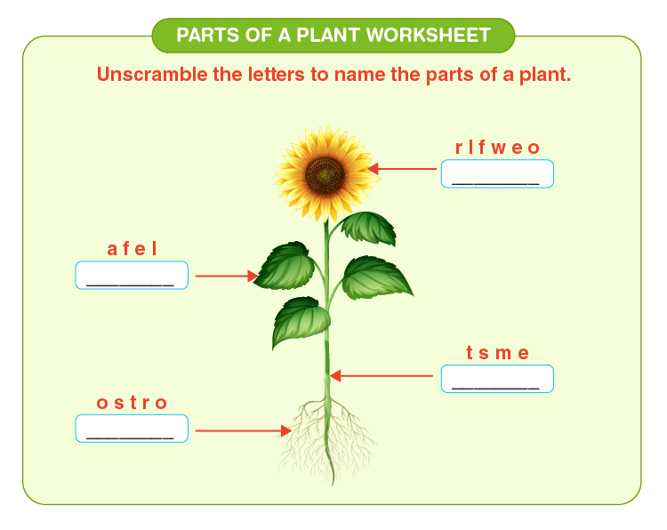 Unscramble letters to form correct words: Worksheets on parts of a plant.