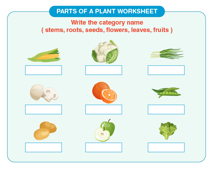 Name the parts of a plant on the worksheet: Parts of a plant printable worksheets for kids