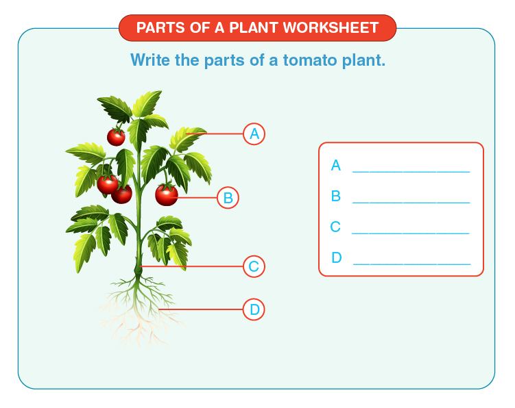 Label parts of a plant on the space provided:  Label the parts of a plant worksheet