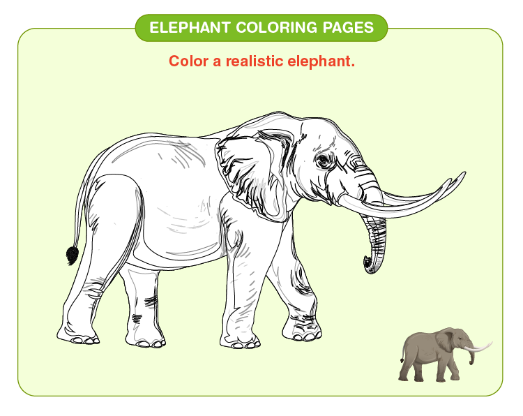 Color the elephant:  Elephant coloring pages for kids